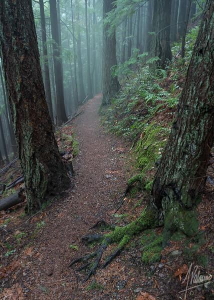 Trail at Tiger
