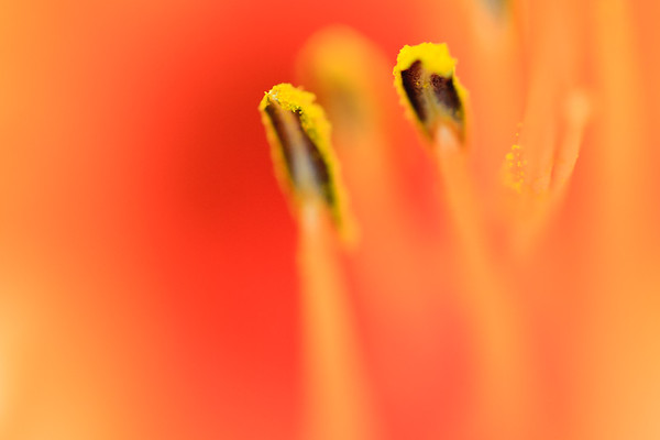 Impressions of a flower