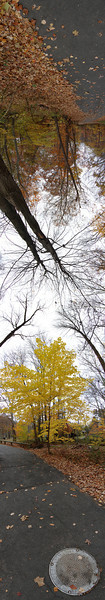 """Vertical 180-degree panorama of some trees and a path through the woods.<br /> View it in full resolution here: <a href=""""http://photos.kevinworkman.com/Pictures/2011/i-rfvt8F6/0/O/TreePanorama4.jpg"""">http://photos.kevinworkman.com/Pictures/2011/i-rfvt8F6/0/O/TreePanorama4.jpg</a>"""