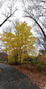 """Vertical panorama of a tree in the woods.<br /> View it in full resolution here: <a href=""""http://photos.kevinworkman.com/Pictures/2011/i-t26rcmj/0/O/TreePanorama2.jpg"""">http://photos.kevinworkman.com/Pictures/2011/i-t26rcmj/0/O/TreePanorama2.jpg</a>"""