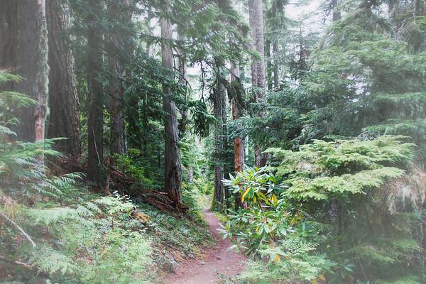 Timberline Trail near Ramona Falls