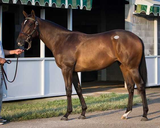 Hip 725 War Front/Eclisse '11 filly