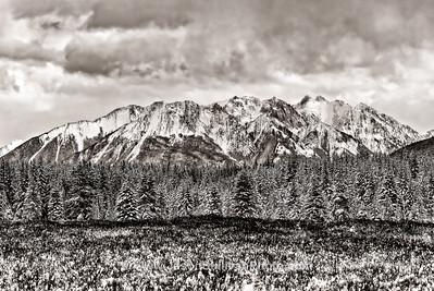 Moose Terrain