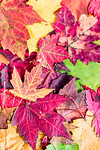 View in photo store: Autumn in Ottawa