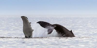 Whale Parts