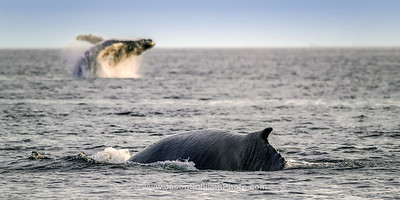 Whale Action