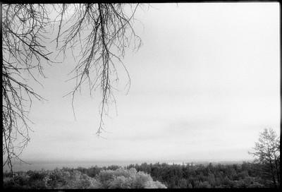 The Forest of Nisene Marks, 1992.