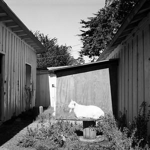 Carmel, California, 2011.