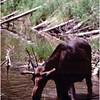 Moose Cascade Trail, Tetons
