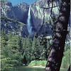Yosemite Fall, Tree, Merced River