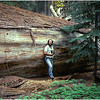 Sequoia Log & Photographer