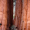 Sequoias Group