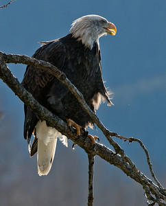 Perched and poised