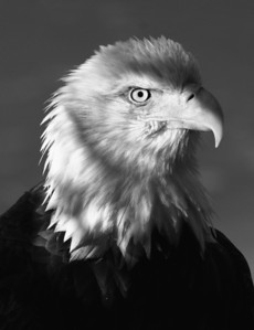 Portrait of Pride