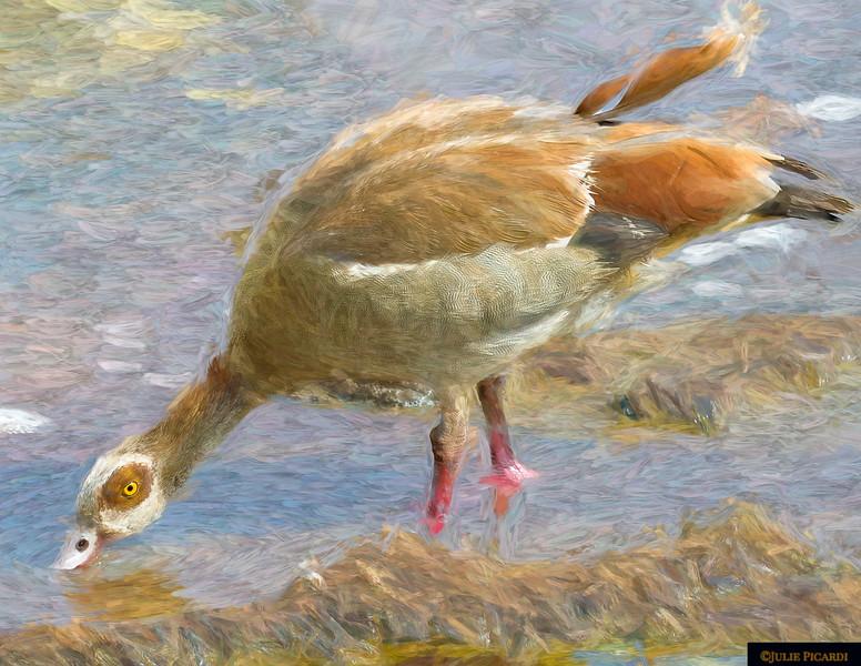 Egyptian Goose Artistic Impression