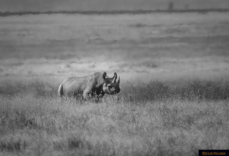 Angry Black Rhino B&W