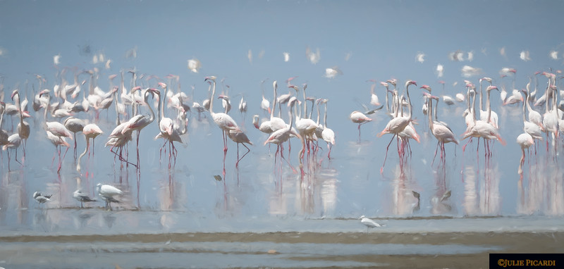 Flamingos at Lake Manyara -Impressionistic