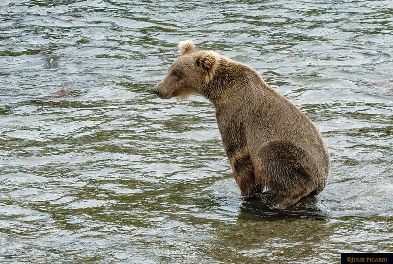 Wimpy bear.