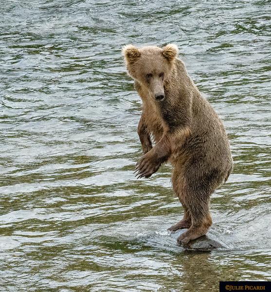 Bear yoga.