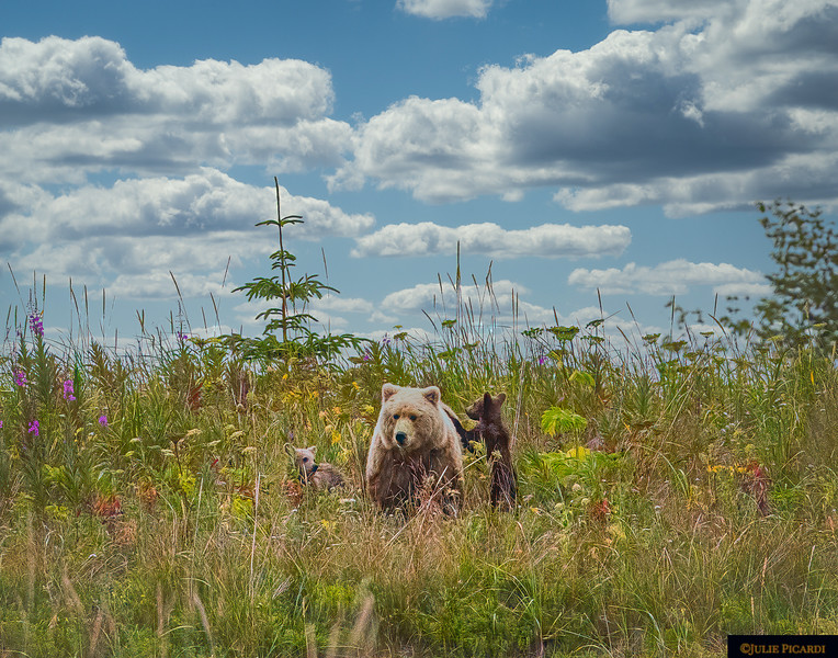 Blond Mom and her cubs in the tall grass and wildflowers.