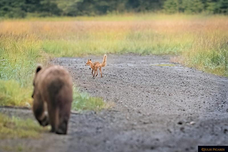 Bear and fox share company