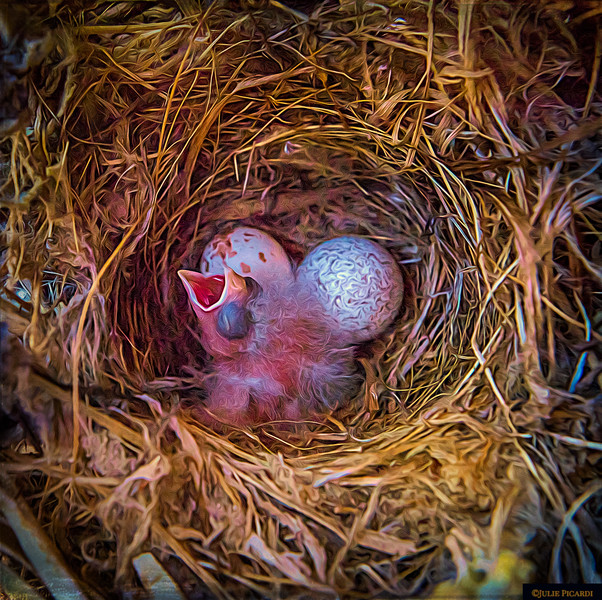 This little guy was hatched in a nest that the mama made in our front door wreath.