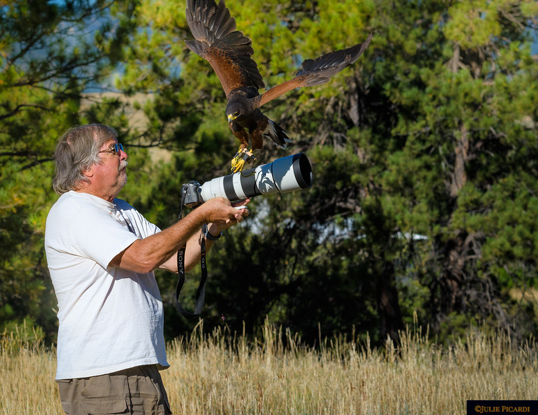 A Harris Hawk attempts to land on instructor Rob Palmer's lens