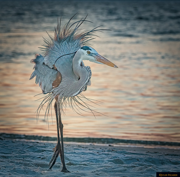 Dancing a little jig on the beach.