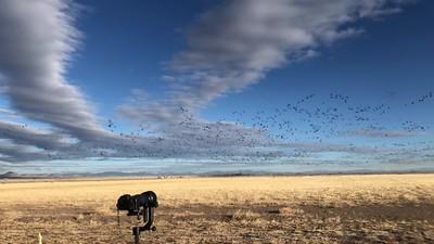 VIDEO: Sandhill Cranes