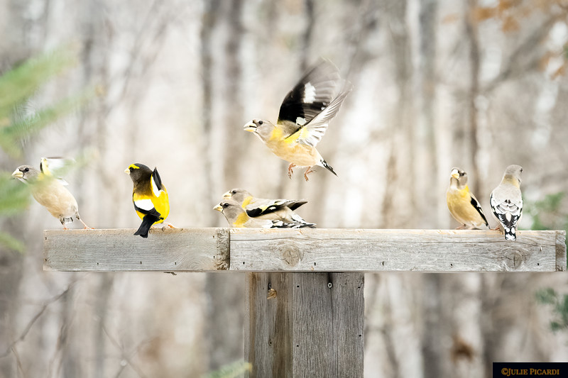 Party at the Feeder