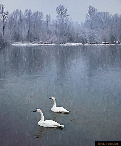 Trumpeter Swans Impressionism