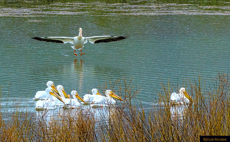 """""""Landing gear down, check"""" Oxbow Bend May 2018"""