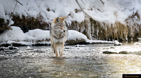 We watched as he hunted for about an hour in the icy water.