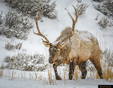 Struggling Through the Snow