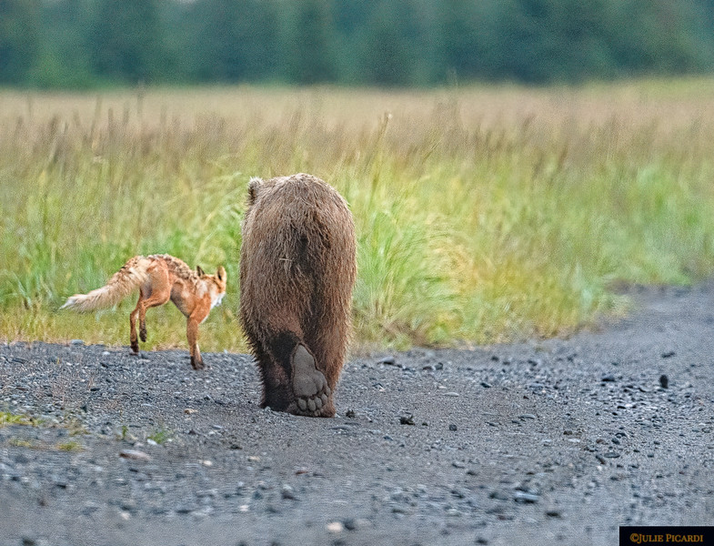 The fox and the bear