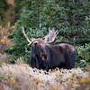 Posing Bullwinkle