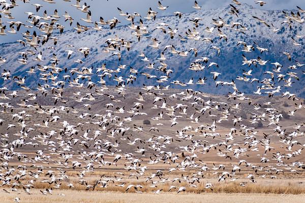 Through the Flock
