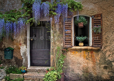 Tourtour: Wisteria In Full Bloom:  (Var) South of France, May 2013
