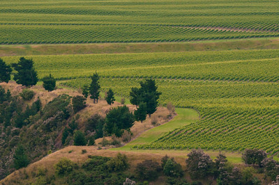 Vineyards High Above River in Hawkes Bay Area Of New Zealand