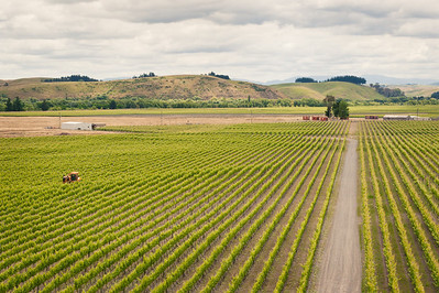 Hawkes Bay Vineyards, New Zealand