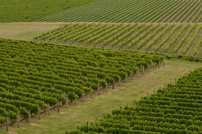 Vineyard Patterns, Hawkes Bay, New Zealand
