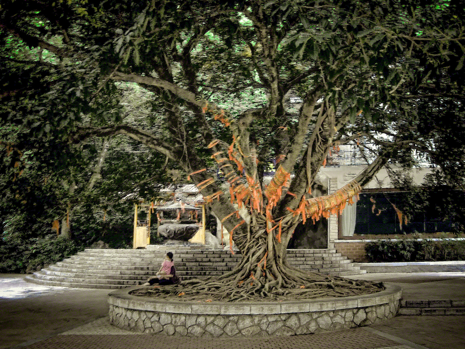 A Banyan wishing tree covered with red ribbons in Guilin China with Intentionally Lost and Kevin Wenning #intentionallylost