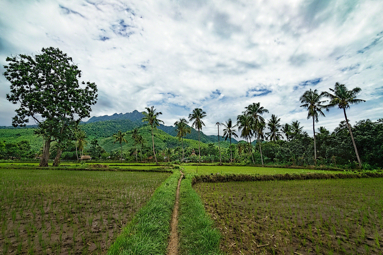 Village path through rice fields in Probolinggo Indonesia with Intentionally Lost and Kevin Wenning #intentionallylost
