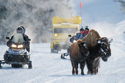 Yellowstone winter traffic