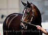 "Zenyatta : EquiSport Photos' ""Zenyatta"" images are intended for MEDIA & EDITORIAL USE.