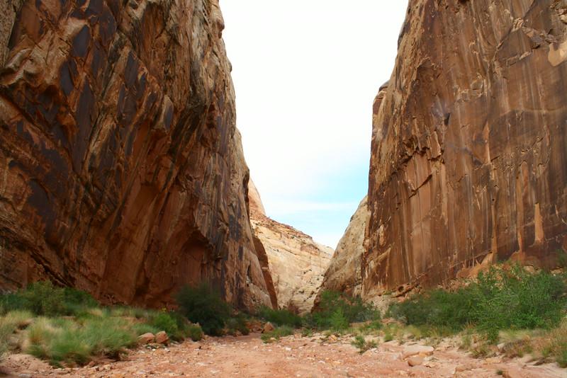 Reef Canyon Walls