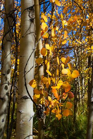 Aspen, North Park 2013