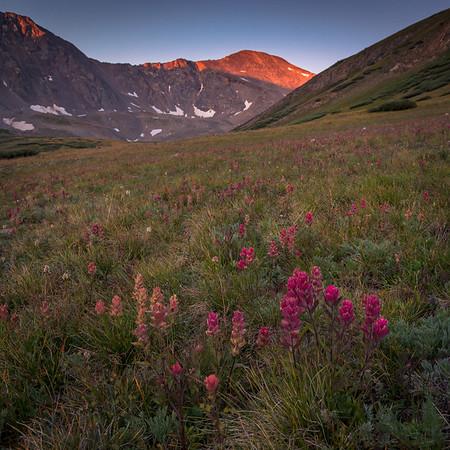 Purple Dawn Greys Peak