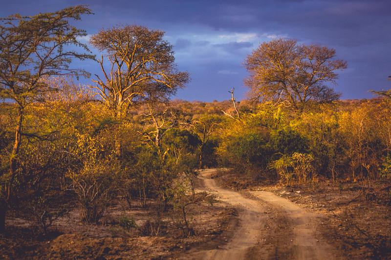 Dusk in the Bush, Tangala