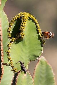 Butterfly and Lizard - Rukiya Camp Deck